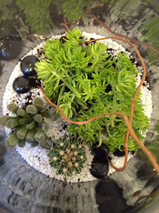 Florist Choice Terrarium, let one of our team specially design a terrarium just for you.