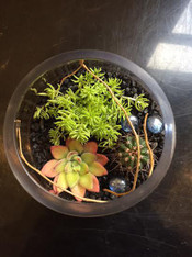 Terrarium Contains: 2 Succulents 1 Cactus 1 Bell Vase Activated carbon Pumice Pebbles Decorative stones