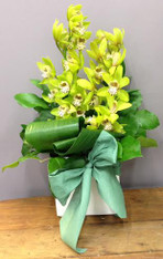Orchid box arrangement with assorted greenery