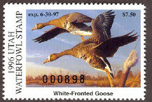 Utah Duck Stamp 1996 White - Fronted Goose