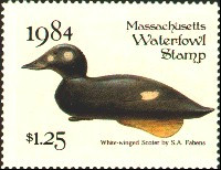 Massachusetts Duck Stamp 1984 White - Winged Scoter Stamp portrays decoy