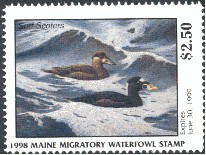 Maine Duck Stamp 1998 Surf Scoter