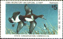 Iowa Duck Stamp 1980 Redheads