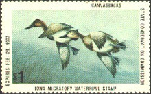 Iowa Duck Stamp 1976 Canvasbacks