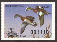 Illinois Duck Stamp 1981 American Wigeon G. W. Teal error