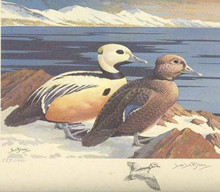 US Federal Duck Stamp Print RW40 (1973-1974)
