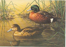 Australia Duck Stamp Print 1990 Chestnut Teal by Jim Hautman
