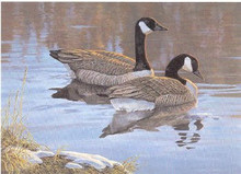 Alberta Duck Stamp Print 1989 Canada Geese by Isabel Levesque
