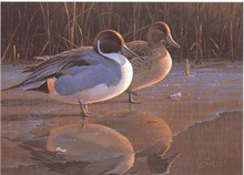 National Fish and Wildlife Stamp Print 1991 Pintails by Daniel Smith Medallion Edition