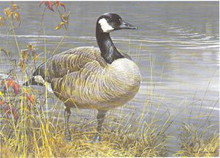 National Fish and Wildlife Stamp Print 1987 Canada Geese by Robert Bateman Medallion Edition
