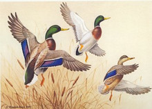 Ducks Unlimited Duck Stamp Print 1985 Mallards by Maynard Reece Artist Proof without Stamp