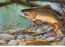 Wyoming Stamp Print 1988 Cut-Throat Trout by Clark Ostergaard