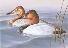 Wisconsin Duck Stamp Print 1986 Canvasbacks by Don Moore
