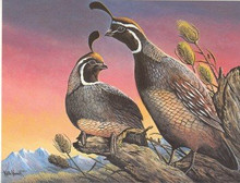 Washington Upland Bird Fund Stamp Print 1980 Quail by Keith Warrick