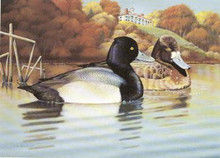 Virginia Duck Stamp Print 1994 Leser Scaup by Francis Sweet