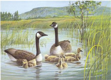 Vermont Duck Stamp Print 1989 Canada Geese by Jim Killen Medallion Edition