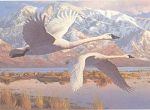 Utah Duck Stamp Print 1986 Whistling Swans by Leon Parson