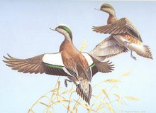 Texas Duck Stamp Print 1983 Widgeons by Maynard Reece