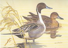 Texas Duck Stamp Print 1982 Pintails by Ken Carlson