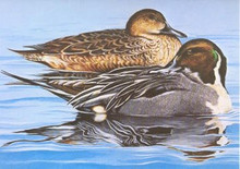 Tennessee Duck Stamp Print 1983 Pintails by Phillip Crowe