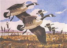Tennessee Duck Stamp Print 1982 Canada Geese by Ken Shulz