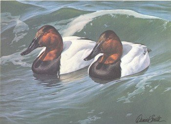 South Carolina Duck Stamp Print 1986 Canvasbacks by Daniel Smith