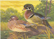 South Carolina Duck Stamp Print 1981 Wood Ducks by Lee LeBlanc