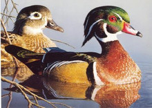 Rhode Island Duck Stamp Print 1994 Wood Ducks by Robert Steiner