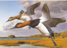 Rhode Island Duck Stamp Print 1989 Canvasbacks by Robert Steiner