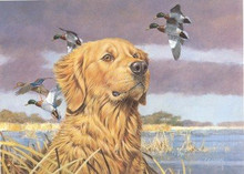 Oregon Duck Stamp Print 1990 Golden Retriever / Mallards by Roger Cruwys