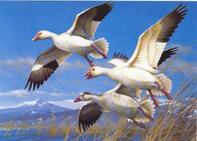 Oregon Duck Stamp Print 1985 Lesser Snow Geese by Michael Sieve Medallion Edition