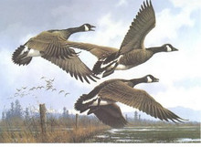 Oregon Duck Stamp Print 1984 Canada Geese by Michael Sieve Medallion Edition