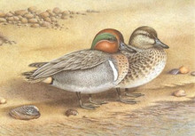Oklahoma Duck Stamp Print 1982 Green-winged Teal by Jeffery Frey
