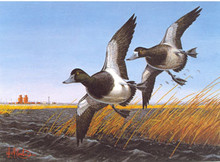 North Dakota Duck Stamp Print 1985 Greater Scaup by Leslie C. Kouba