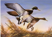 North Dakota Duck Stamp Print 1983 Mallards by Terry Redlin