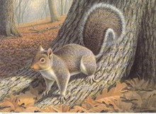 North Carolina Sportsman Duck Stamp Print 1989 Squirrel by Ronald J. Louque Artist Proof