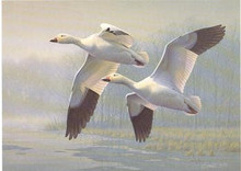 New Jersey Duck Stamp Print 1989 Snow Geese by Daniel Smith