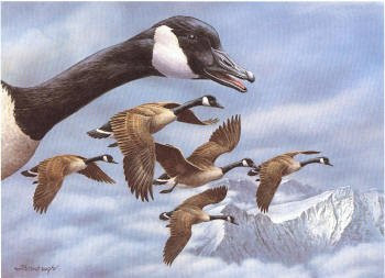 Montana Duck Stamp Print 1986 Canada Geese by Joe Thornbrugh Exec Edition