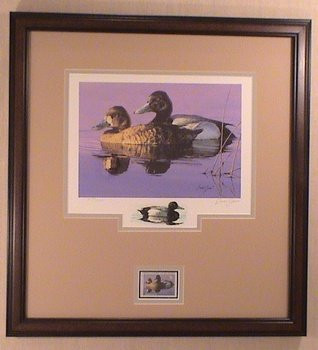 Minnesota Duck Stamp Print 1986 Lesser Scaup by Brian Jarvi Framed