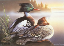 Michigan Duck Stamp Print 1992 Red-breasted Mergansers