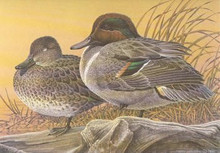 Michigan Duck Stamp Print 1987 Green-winged Teal by Larry Hayden