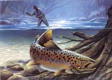 Kentucky Trout Duck Stamp Print 1985 Brown Trout by Heiner Hertling