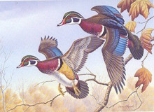 Kentucky Duck Stamp Print 1986 Wood Ducks by Dave Chapple