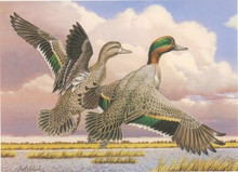 Kansas Duck Stamp Print 1987 Green-winged Teal by Guy Coheleach Medallion Edition