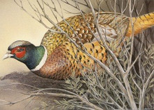 Idaho Upland Game Stamp Print 1993 Ring-necked pheasant by Sherrie Russel Meline