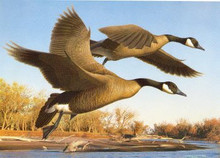 Colorado Duck Stamp Print 1990 Canada Geese by Robert Steiner
