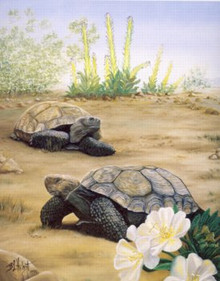 California Native Species Stamp Print 1991 Desert Tortoises by B L. Hilgert