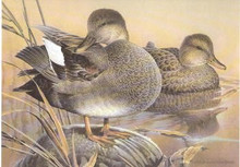 California Duck Stamp Print 1991 Gadwalls by Larry Hayden Executive Edition