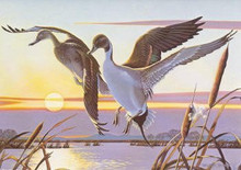 California Duck Stamp Print 1980 Pintails by Walter Wolfe