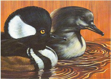 California Duck Stamp Print 1978 Hooded Mergansers by Kenneth L. Michaelsen Color Remarque